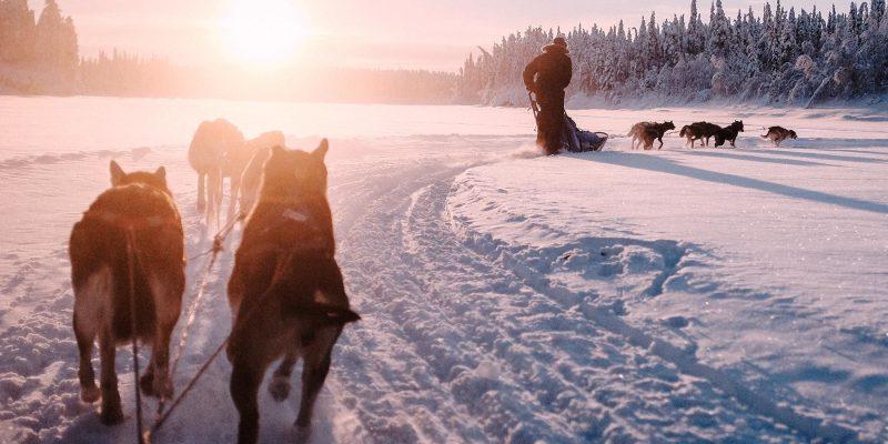 Huskytocht met de hondenslede in Lapland