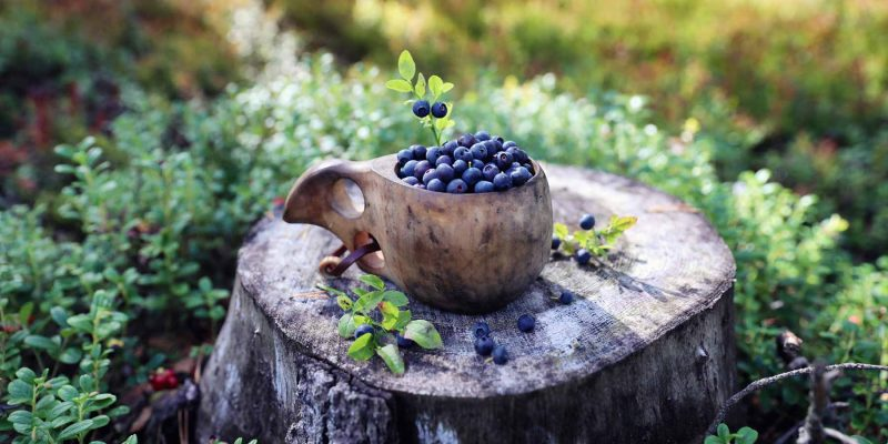 Blauwe-bessen-plukken-in-de-Finse-bossen