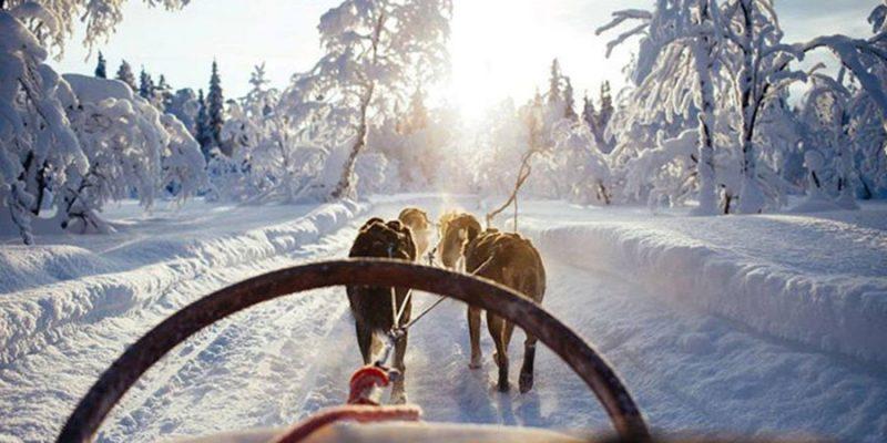 Een tocht met de hondenslee tijdens een winterreis naar Lapland