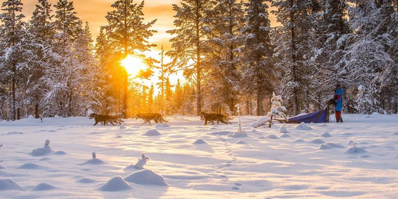 Lapland: Huskytochten door winter wonderland