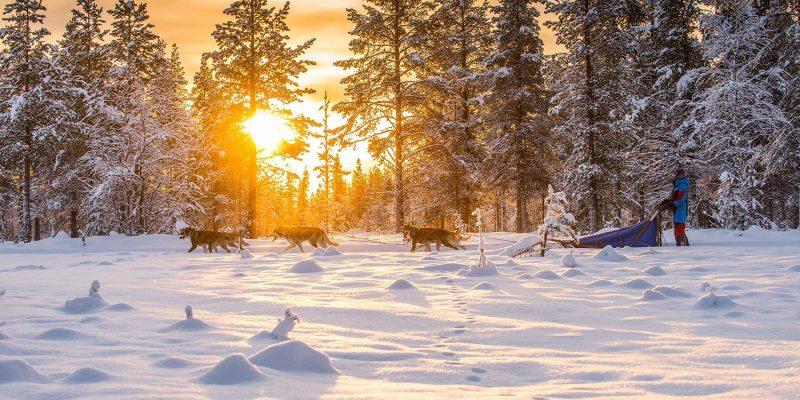 De huskytocht is één van de mooiste Laplandactiviteiten