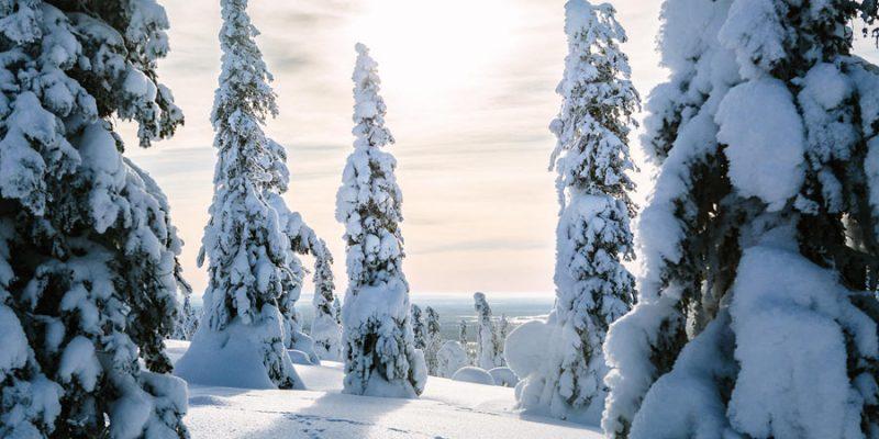 Landschap tijdens een wintervakantie in Finland