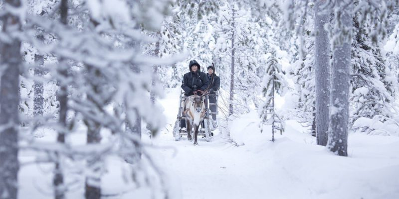 Rendieren safari in Fins Lapland