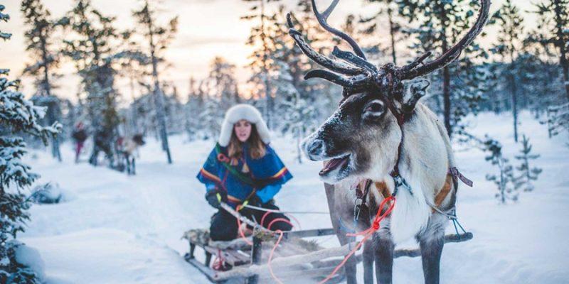 Sami-cultuur-Lapland-rendier-slee