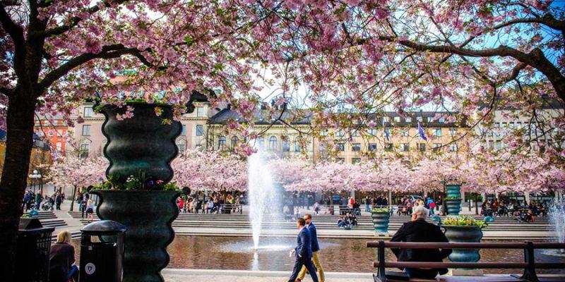 Stockholm-met-bloesems