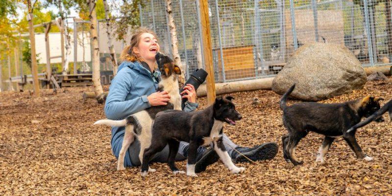 huskys knuffelen in Zweeds Lapland
