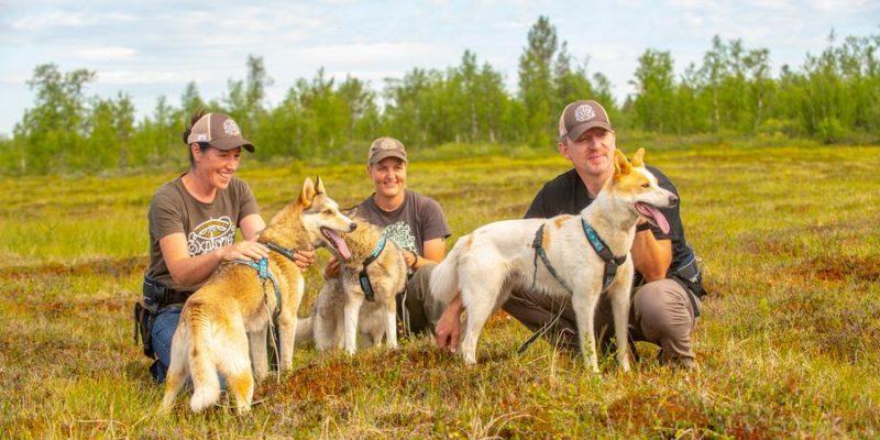 Wandelen met huskys in Lapland