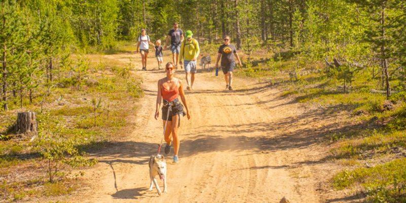 wandelen met huskys in Zweeds Lapland bij de Pinetree Lodge