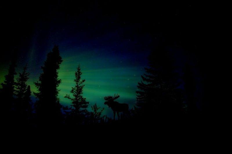 Nordic Noorderlicht Eland