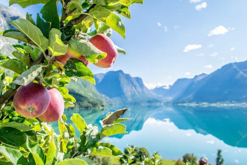 Appels in de Noorse fjorden - Naar Noorwegen in de lente met Nordic