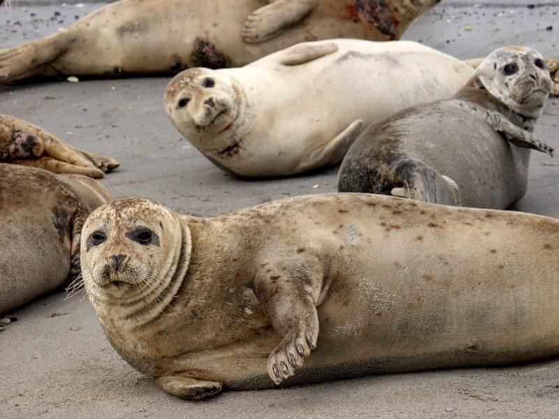 Zeehonden spotten in Wadden Nationaal Park - naar Denemarken met Nordic