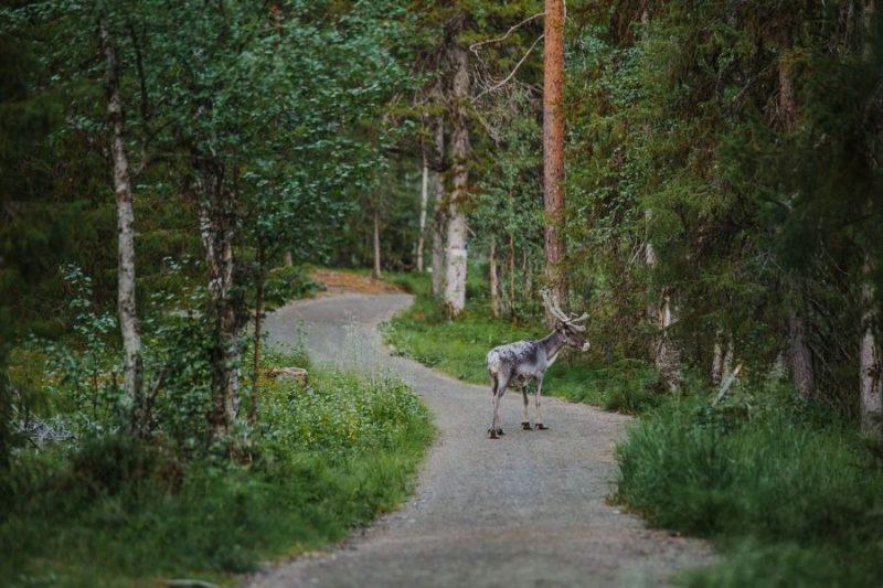 Eland in Finland