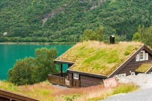Mosgroene daken op de vakantiehuizen