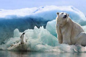 Ijsberen en pinguins in Antarctica met Nordic