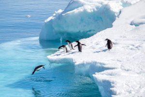Pinguins in Antarctica Nordic