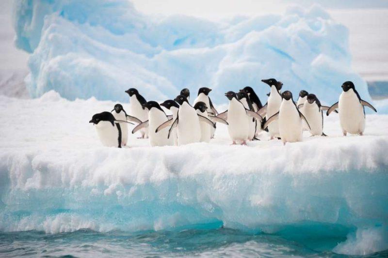 Pinguins spotten op Antarctica met Nordic