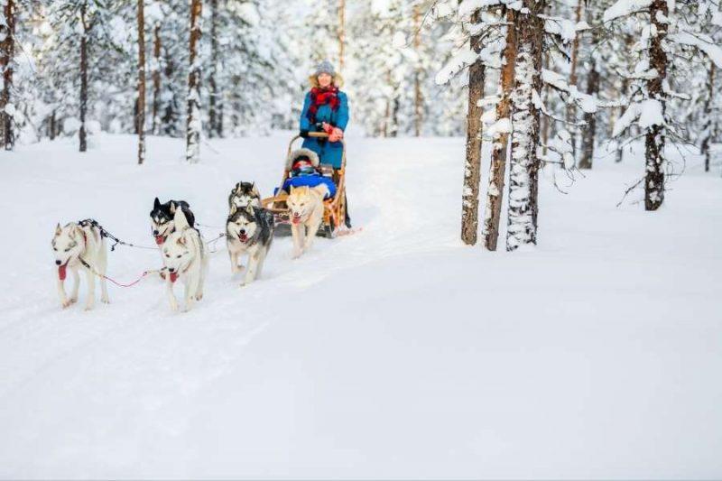 Huskytocht in Winters Lapland - reizen met Nordic