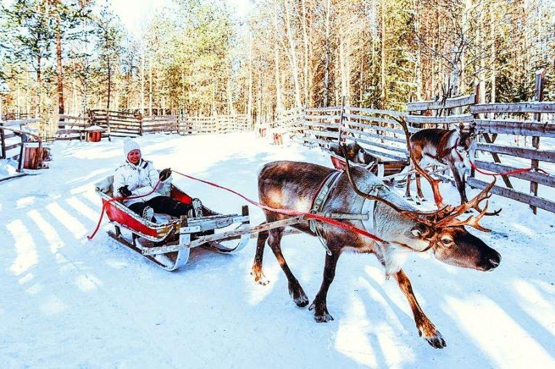 Sami rendierenrace - Nordic