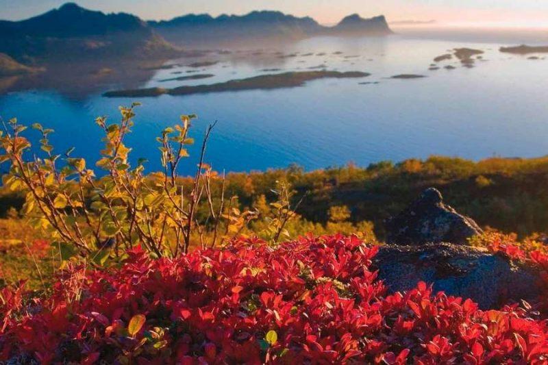 Herfstkleuren in Lofoten ©Nordnorge