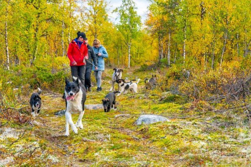 Husky hike in Lapland 4©Micke_Tornq vist_imagebanks.ETN.se