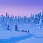 Op huskytocht in Lapland - romantisch Scandinavië