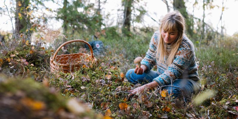 Paddenstoelen plukken - naar Zweden met Nordic - ©Alexander Hall